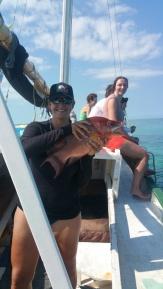 hogfish
